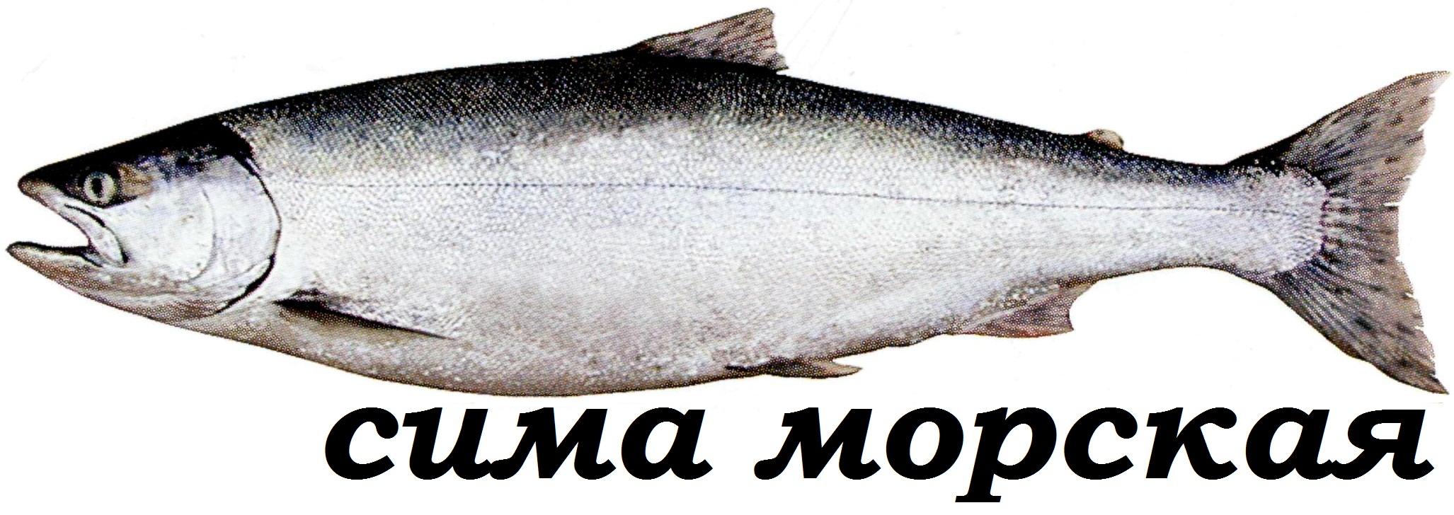 фото рыба хамса